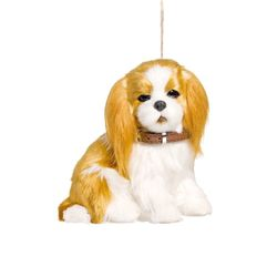 cachorro-cockie
